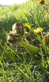 Mutant Wildflowers