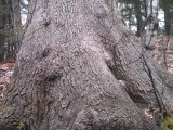 Gnarls Barkley, tree thatis