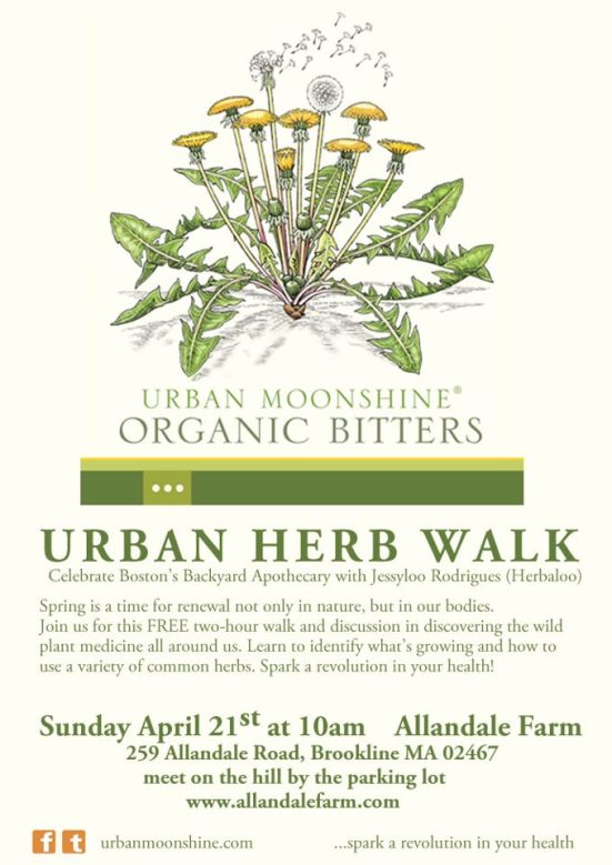 Urban Herb Walk Sunday April 21st in Boston