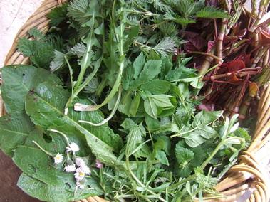(c) wildy nourished - pic harvest basket